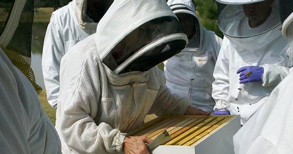stage apicole